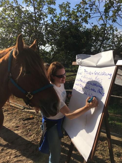 Pferdegestütztes Business Coaching-Professionell im Beruf