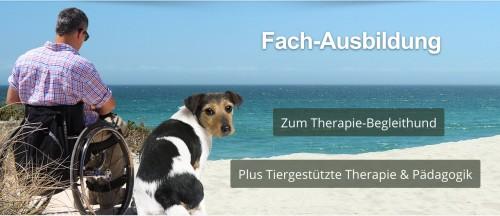 Therapiebegleithund-Ausbildung