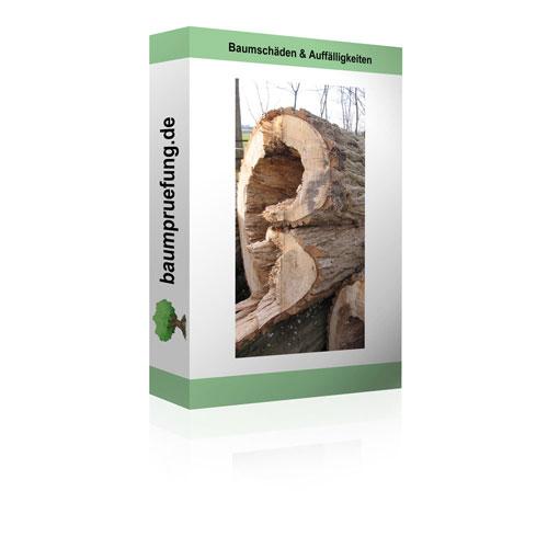 Baumschäden & Auffälligkeiten