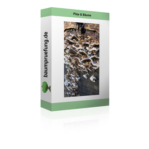 Pilze & Bäume